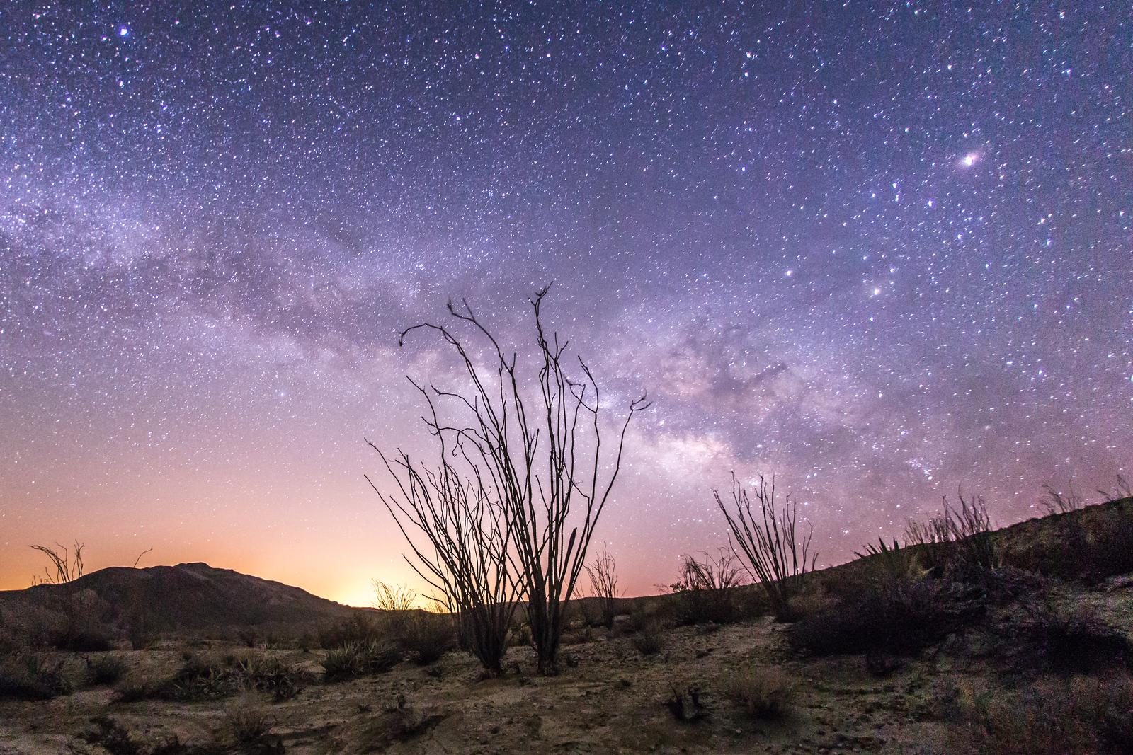 Milky Way and some ocotillo
