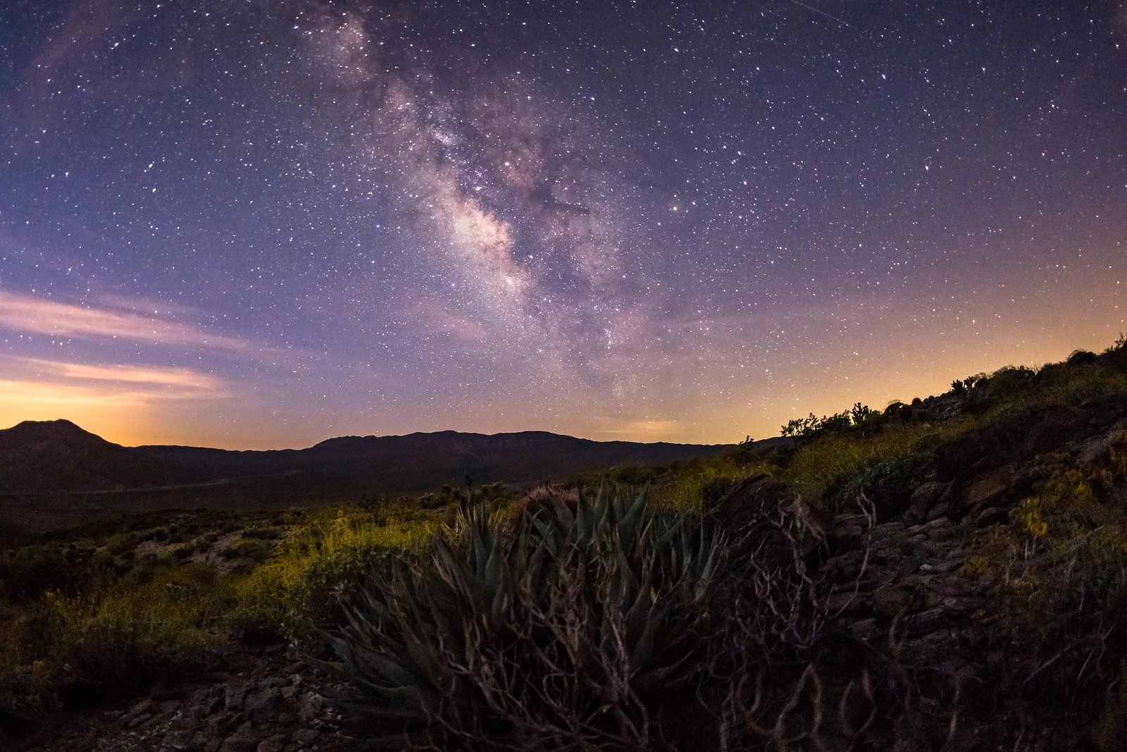 Milky Way Over a Hillside of Agave and Brittlebush at Twilight in the Anza-Borrego Desert.