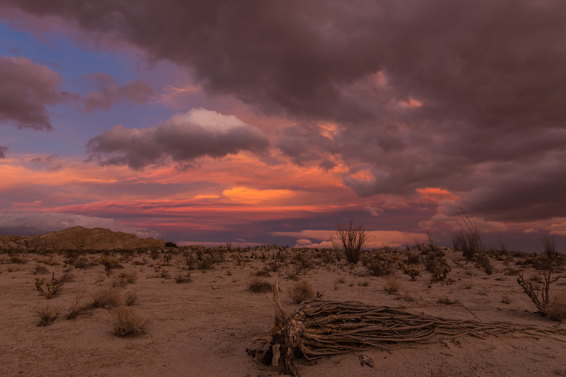Fallen ocotillo and colorful desert sunset