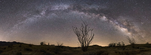 Milky Way Over the Ocotillo in Fonts Wash