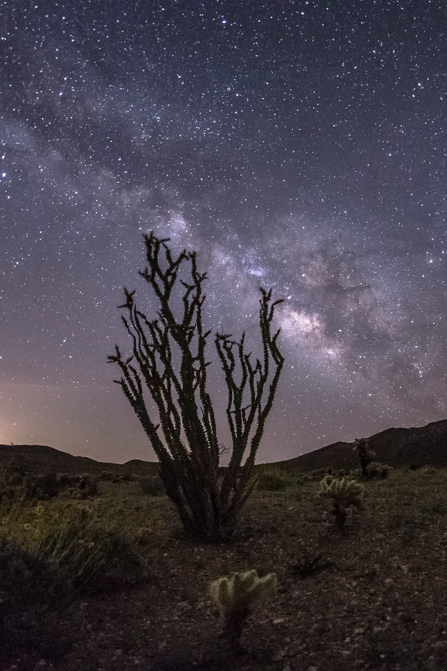 Milky Way and ocotillo in Jojoba Wash