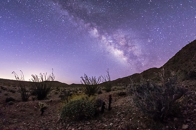 Milky Way over Jojoba Wash in Anza-Borrego