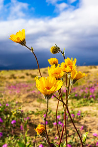 Early Micro Bloom in the Anza-Borrego Desert