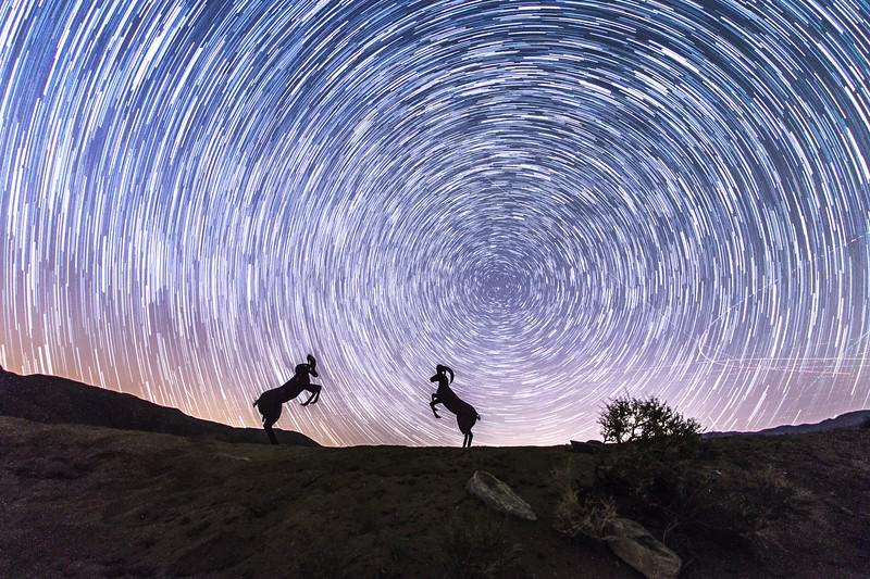 Bighorn Sheep and Star Trails