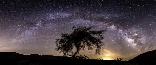 Palo Verde Milky Way