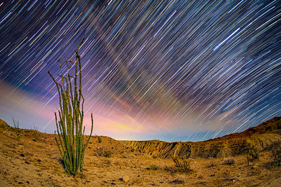 Lone Ocotillo, Badlands, and Star Trails