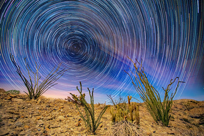 Swell Sparkling Stars Sparkle And Spin Above The Ocotillo.