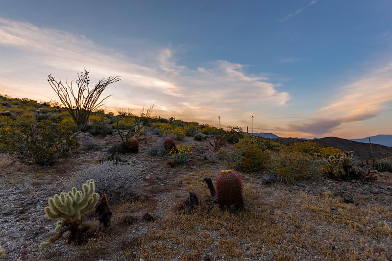 Sunset Near Kenyon Overlook Trail in Anza-Borrego Desert