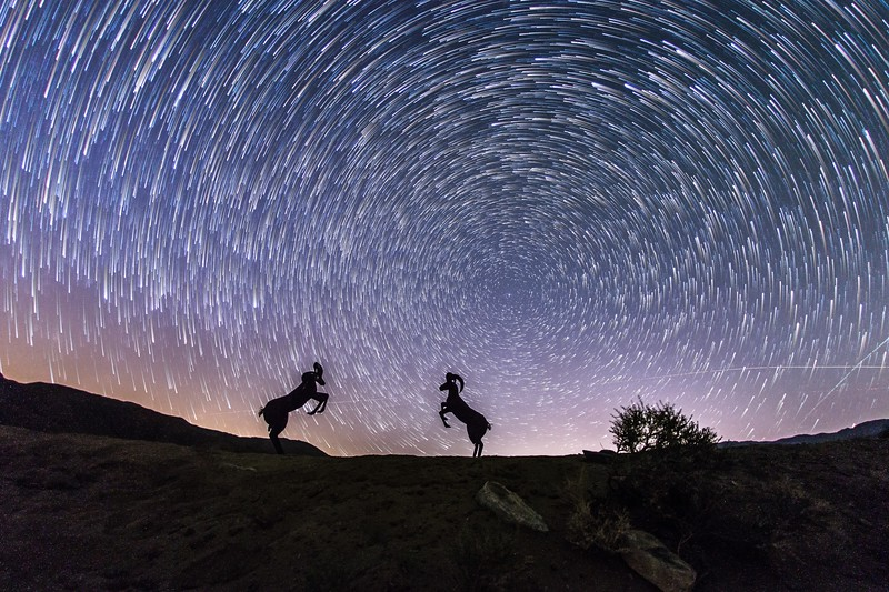 Bighorn Sheep and Star Trails. Different processing