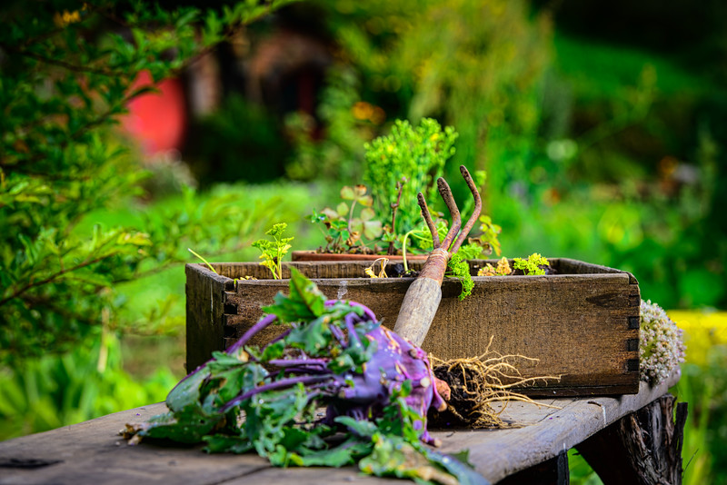 A quiet spell in The Vegetable Garden Colours of Hobbiton Movie Set New Zealand