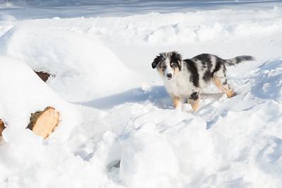 Apache dans la neige