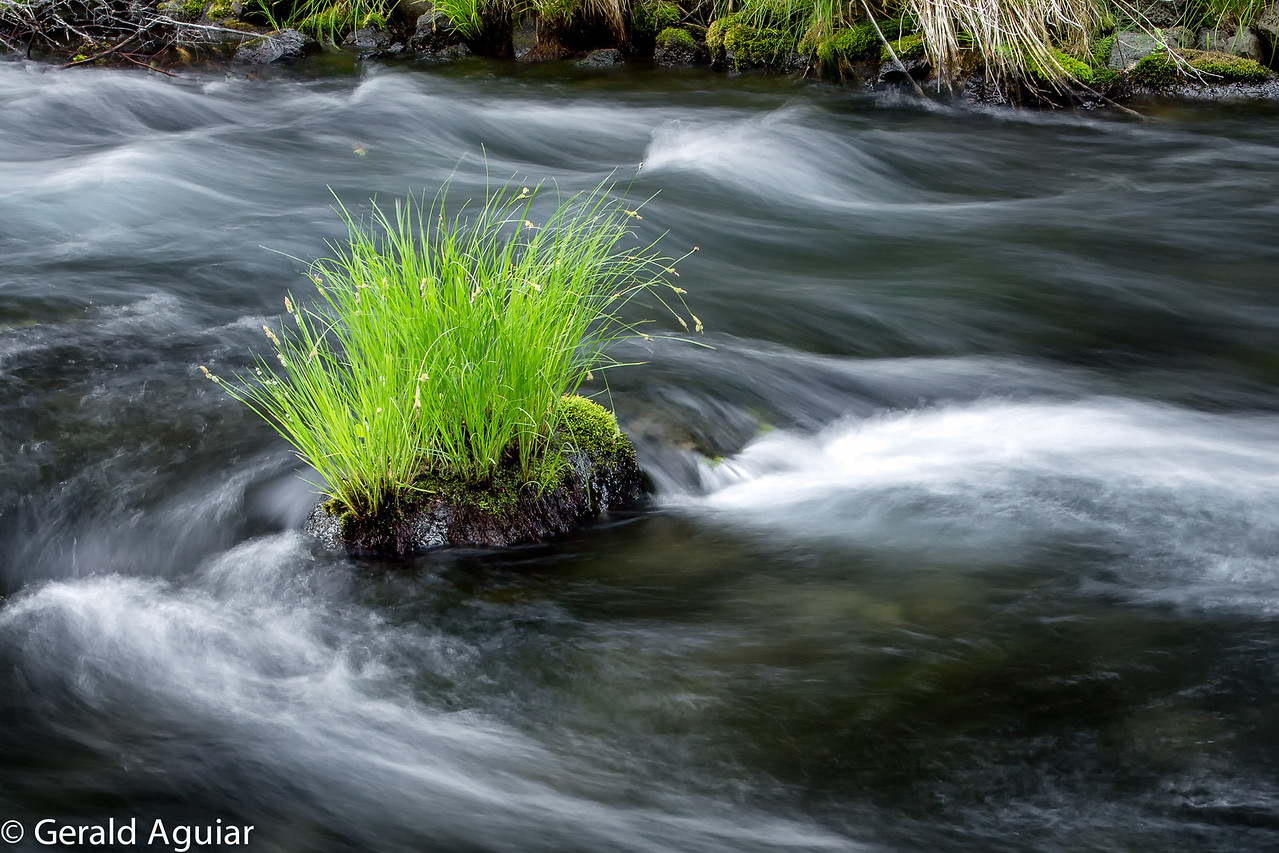 This photo was taken as part of our afternoon shoot at Burney Falls.  I like the detail in the plants and the motion of the water in the stream.