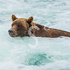 Bubble Bath Grizzly