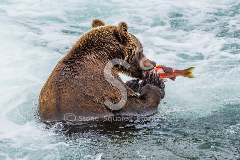 Brooks Falls Bears