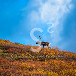 Caribou Ridge