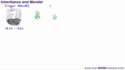 The Work of Mendel
