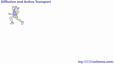 Diffusion and Active Transport
