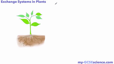 Exchange Systems in Plants
