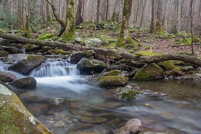 Winter tie at Twin Creeks, Great Smoky Mountains National Park, Tennessee.