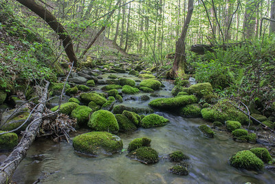A particularly 'green' creek in the Greenbrier section of Great Smoky Mountains National Park, Tennessee.