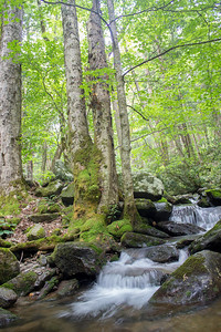 Late spring in Great Smoky Mountains National Park, with Rainbow Falls providing the soothing sound of rushing water.
