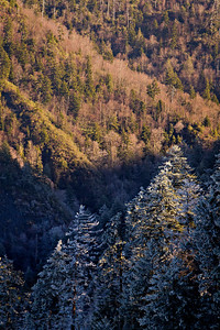 Forests of Great Smoky Mountains National Park. Fresh snow and ice  © Kyle Spradley Photography | www.kspradleyphoto.com