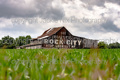 See Rock City barn in a corn field
