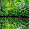 Rosebay Reflections