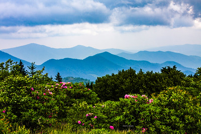 Roan Mountain Rhodos
