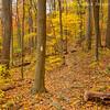 Autumn Splendor along the AT