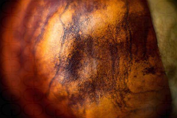 Chestnut Skin No. 2