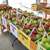 Sholan Farms Mike Meehan farm manager and President Joanne Dinardo talk about the realities of apple poaching at the orchard on Tuesday afternoon in Leominster. In the small store there are bags of apples waiting to be sold. SENTINEL & ENTERPISE/JOHN LOVE