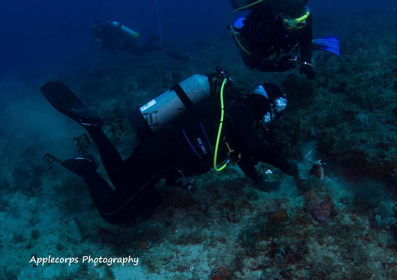 BlueTangApr12_2012-1