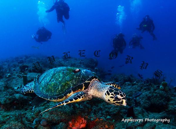 BlueTangApr12_2012-11