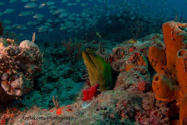 BlueTangMay25_2012-29