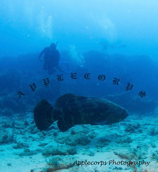 BlueTangMay4_2012-6