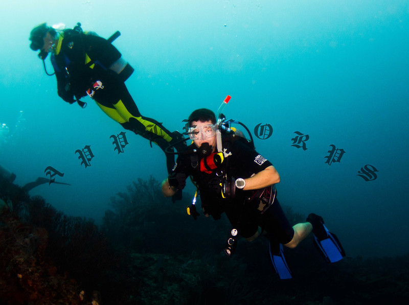 """One diver was wearing only a """"shorty"""" with no hood in this 64F water!  He was by far the toughest diver in the water!"""