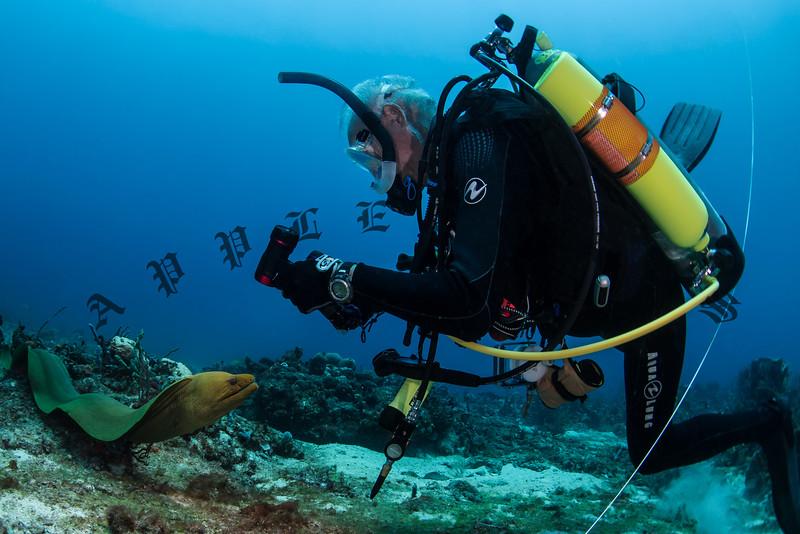 Starfish-63