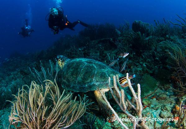 BlueTangMay30_2012-4