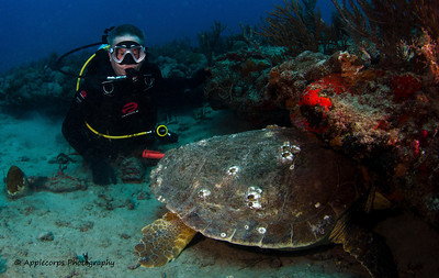 Bob and I are wondering if this Loggerhead Turtle is asleep or not!