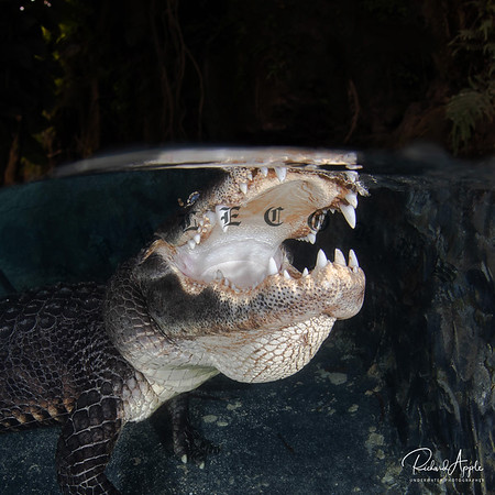 EvergladesOutpost-78