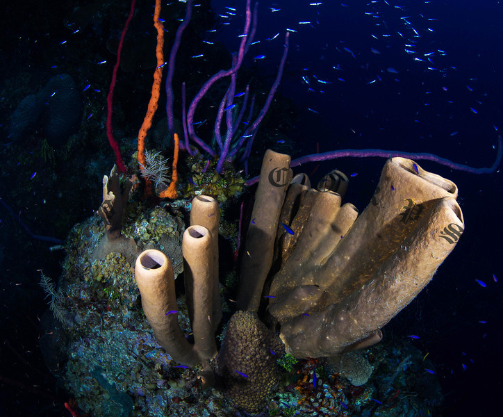 Rope and Spong Coral, Grand Cayman