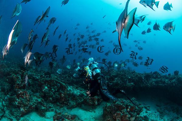 Spade Fish, Juno Beach, FL