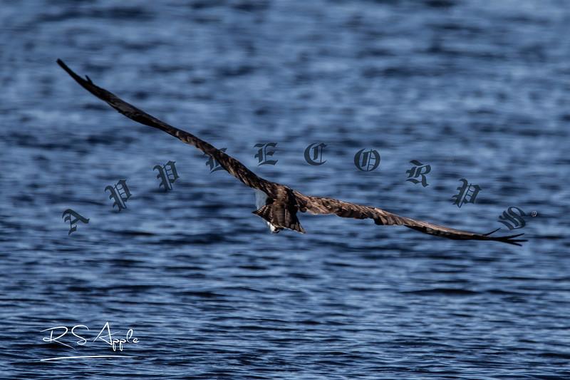 Osprey_Dec9a_2020-15