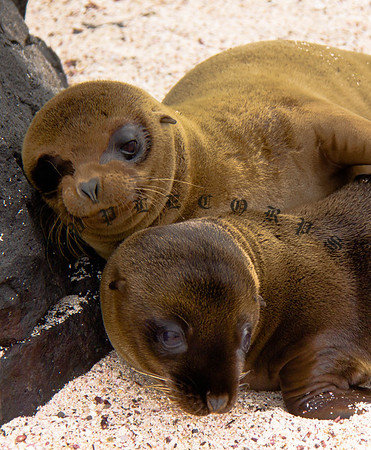 GalapagosDec2011-110