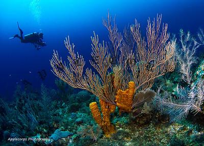 CaymanAug3_2012-16