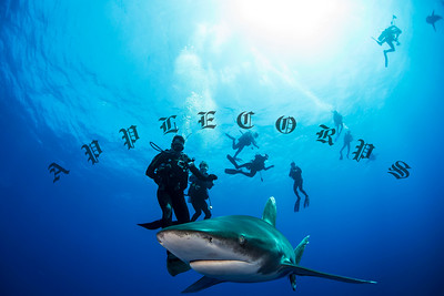 Oceanic White Tip Sharks of Cat Island