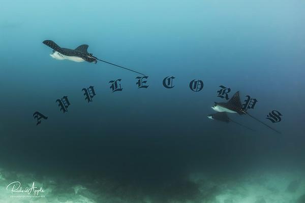 Galapagos1_Apr2019-272