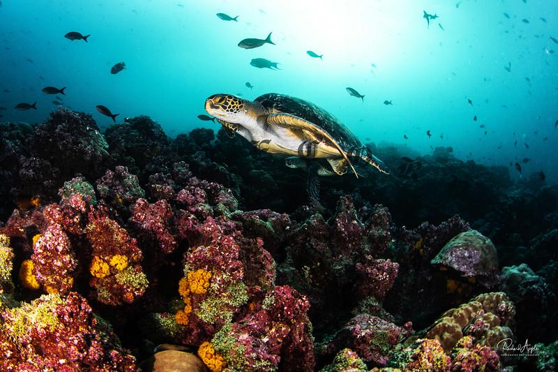 Galapagos2_Apr2019-228