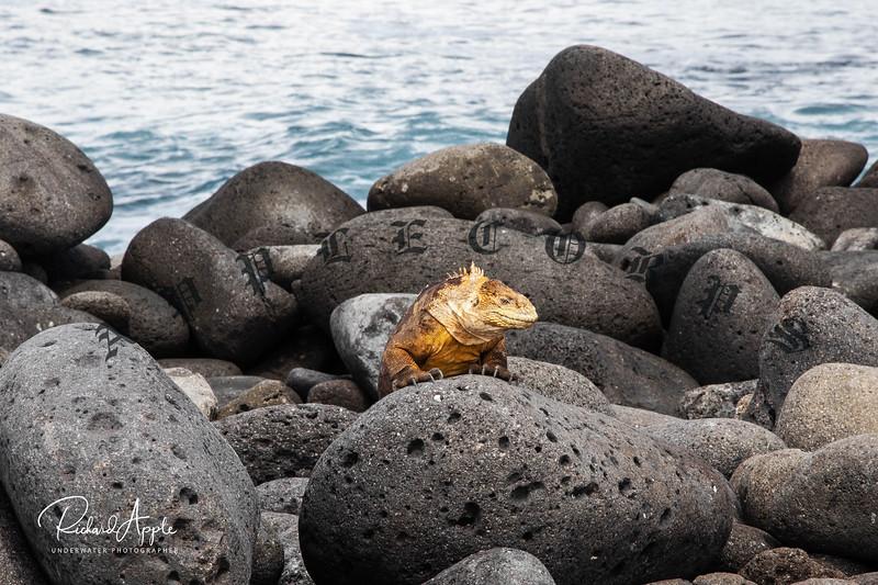 Galapagos1_Apr2019-122